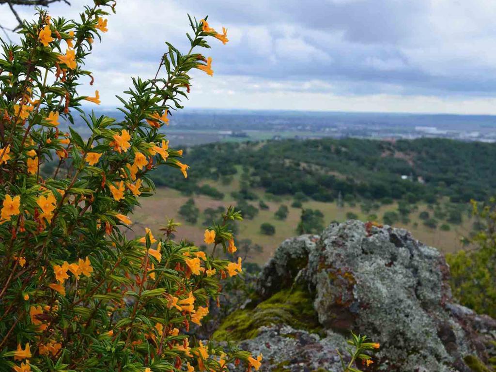 Harmonia Hill, Rockville Trails Preserve
