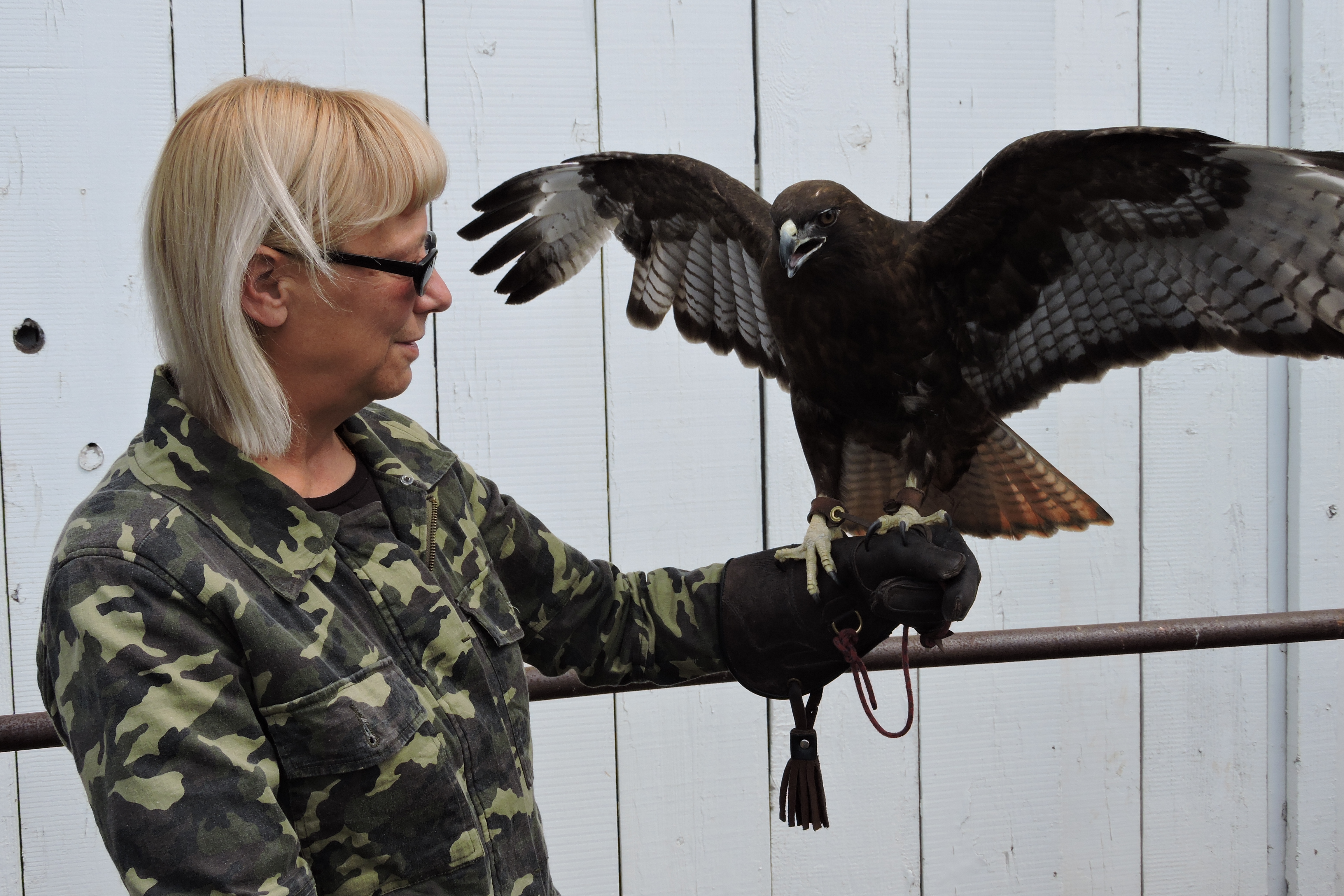 Rita, a red-tail hawk from the Suisun Wildlife Center, was one of the several animals featured at the Rush Ranch Open House