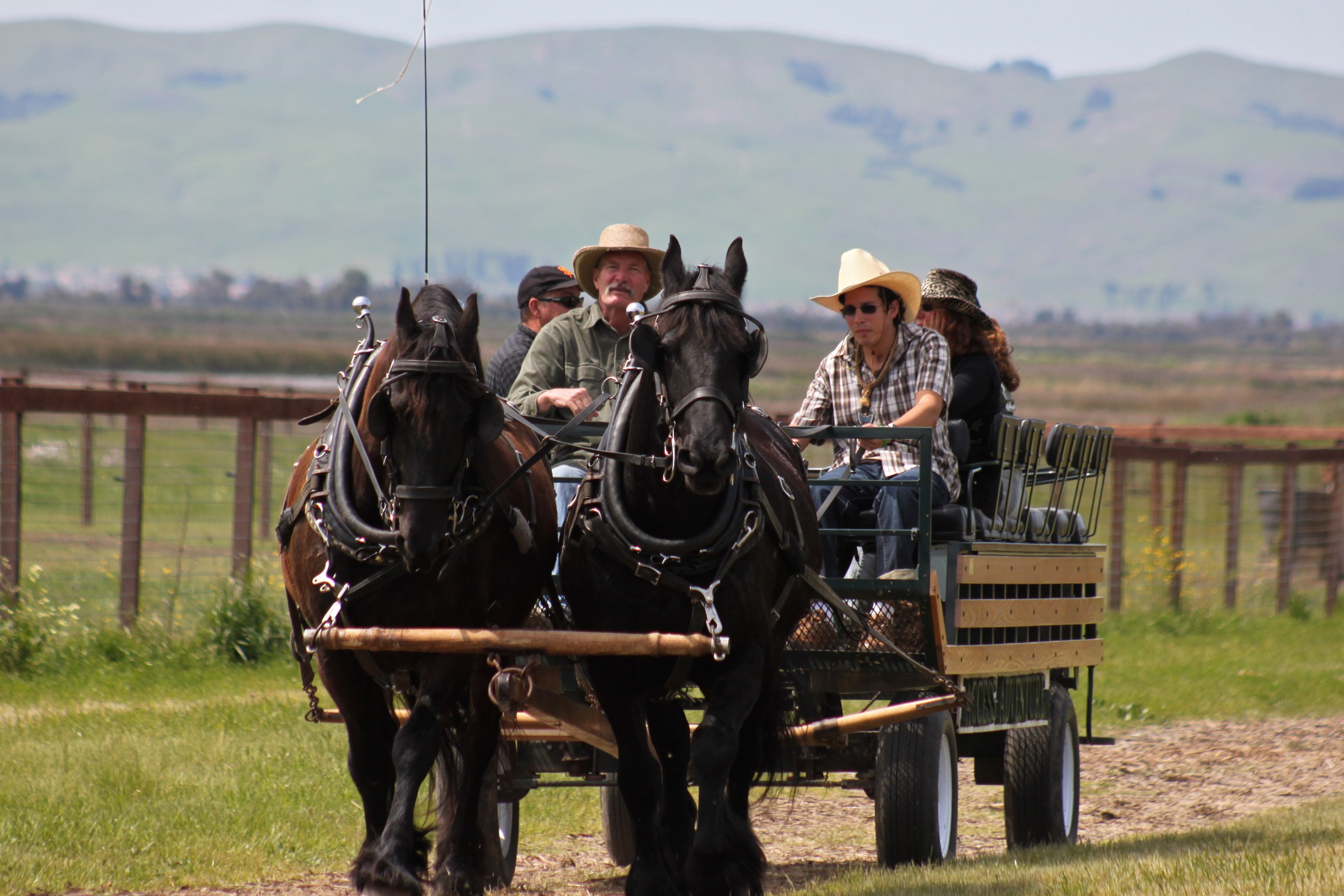 An Access Adventure wagon ride at Rush Ranch, by Elizabeth Moorehead