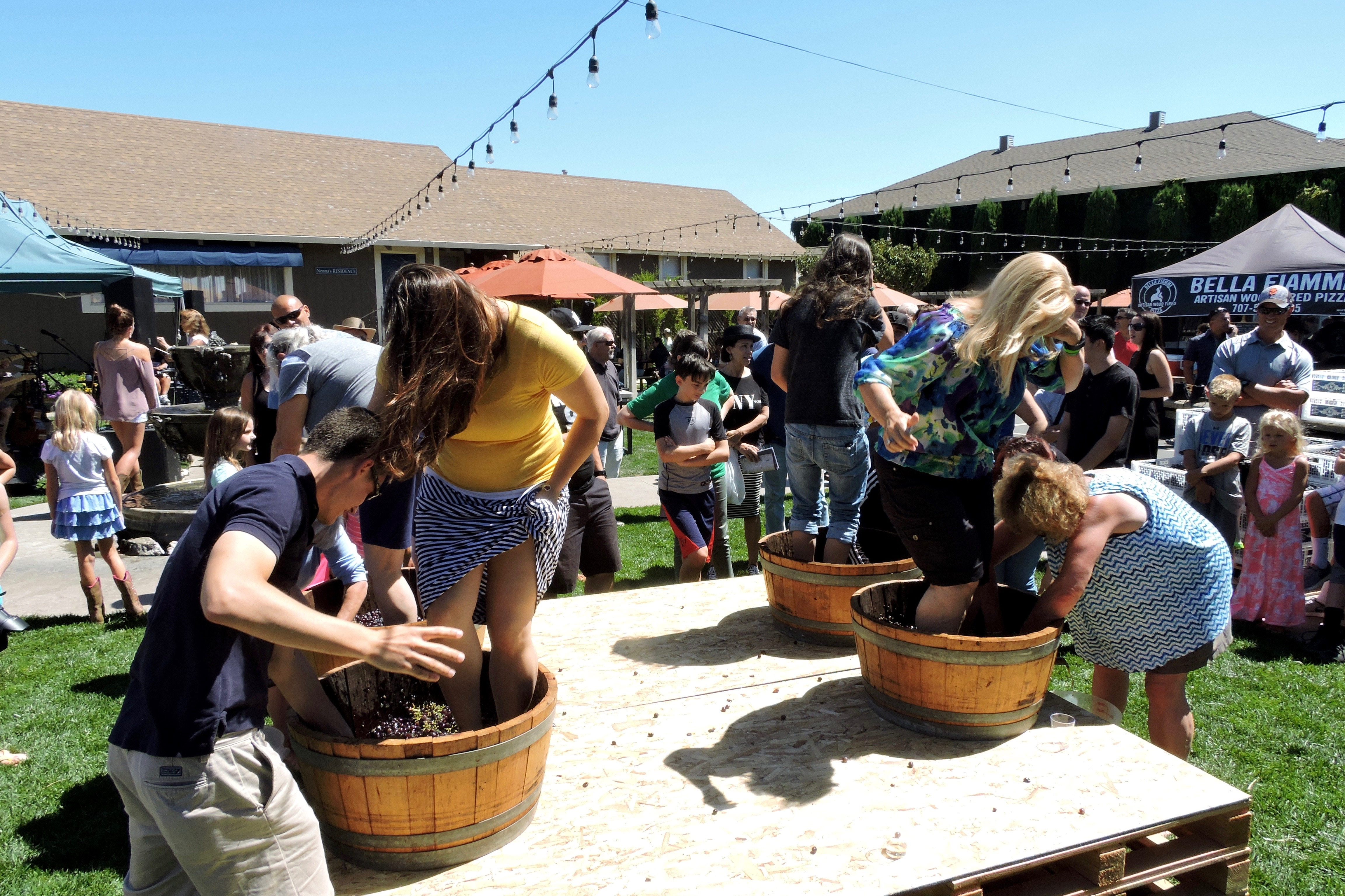 The grape stomping contests at Wooden Valley drew participants of all ages. All time slots were full a good 30 minutes before stomping began.